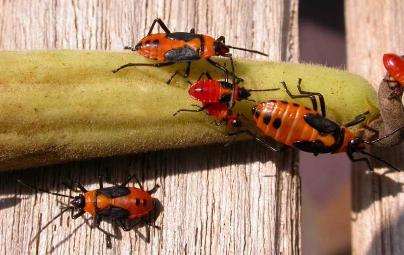 Learn Why Pests Are Attracted to your Home