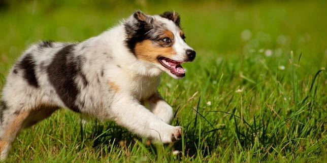 What Does Microchipping Your Dog Entail?