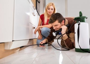 Things to expect from your first Pest Control Service Visit