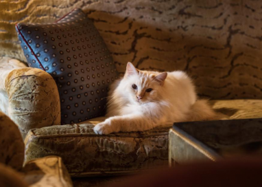 5 Perfect Features and Benefits of Cat Hotels