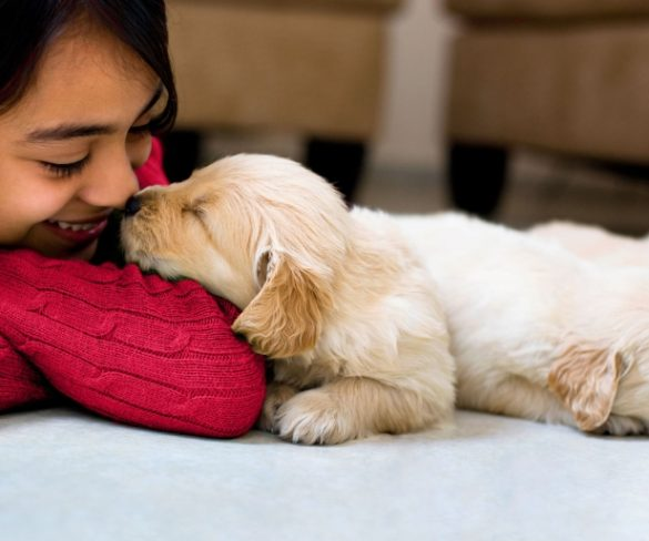 PET NEEDS: MUST-HAVES FOR A PET PARENT