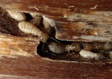 Tips On How To Get Rid Of Termites